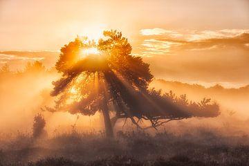 Der Baum des Lebens - Oudemolen, Drenthe, Niederlande von Bas Meelker