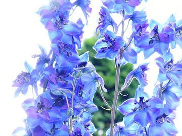 Bloemen van Jellie van Althuis