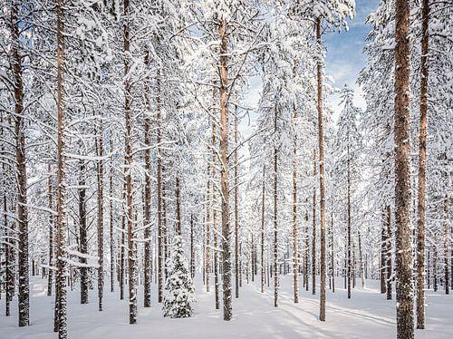 Door de bomen het bos, Finland