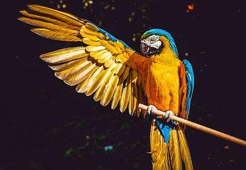 Ara Ara-Papagei von Wilko Zoer