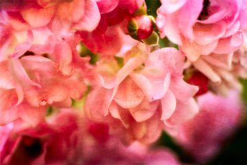 Roses roses sur Claudia Evans