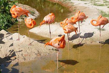 oranje flamingo van Bart Cornelis de Groot