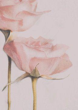 deux Roses, Delphine Devos sur 1x