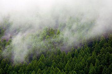 nebligen Wald von Anton de Zeeuw