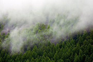 forêt brumeuse sur