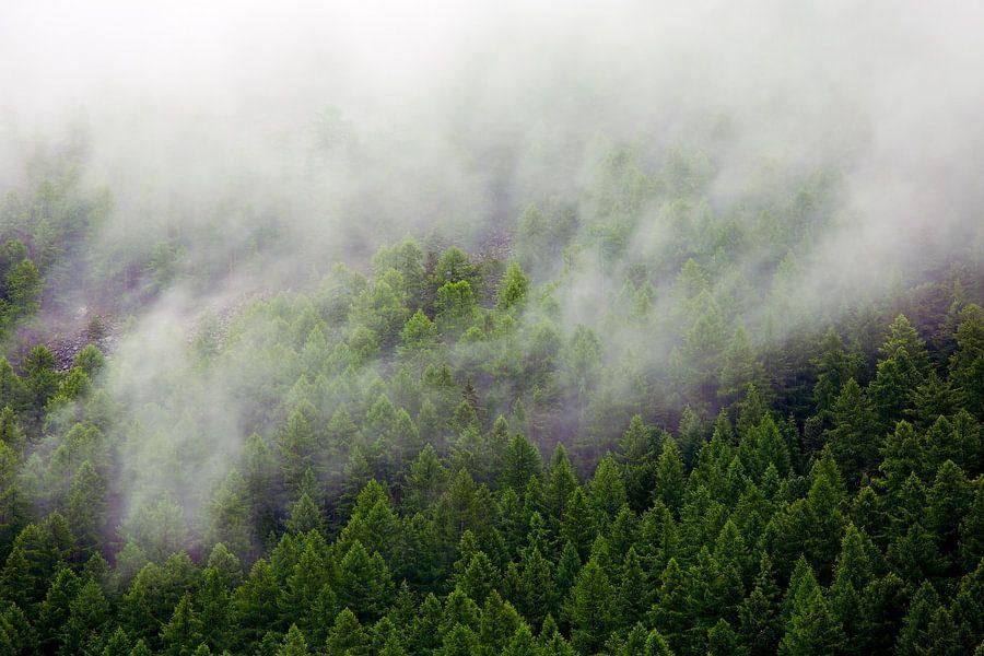 Mistig bos van Anton de Zeeuw