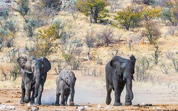 Olifanten rennen naar het water von Erwin van Liempd