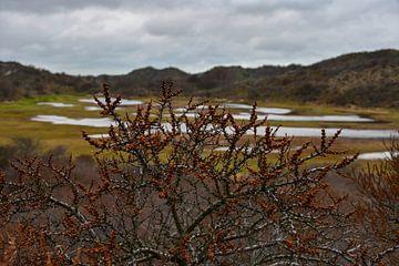 Herbstfarben in den Dünen von Zeeland von bart hartman