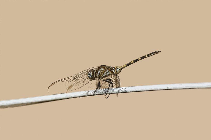 Libelle op waslijn van De Afrika Specialist