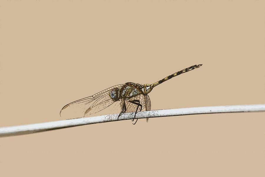 Libelle op waslijn