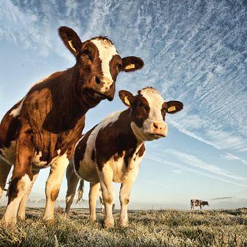 Koeien in een polder van Frans Lemmens