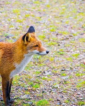 The Waiting Fox van Erik Bravenboer