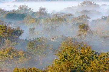 sprookjesachtig landschap von Remco Van Daalen