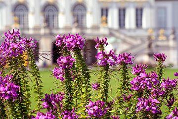 Flowers of Castle Nympfenburg Munich von Michael Nägele