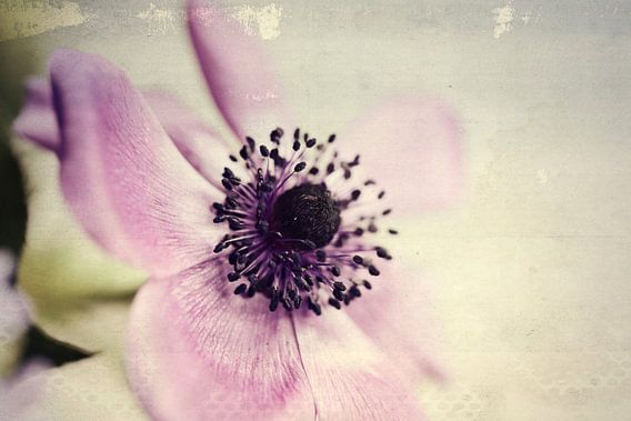 anemone... van Els Fonteine