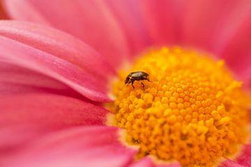 Käfer sur Alena Holtz