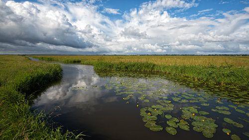 Polderlandschap van René Vos
