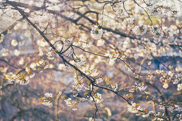 Sunny blossom van