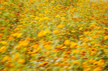 Een weide van gele, oranje en rode bloemen - met bewuste beweging voor een impressionistisch effect. van John Quendag