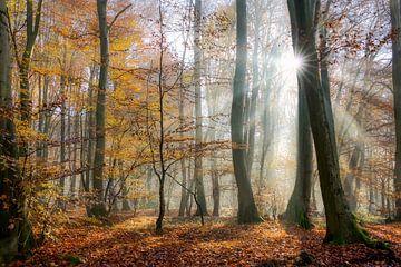 Zonnestralen in een herfstbos van Katho Menden