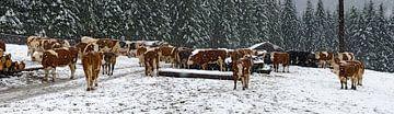 Koeien in de sneeuw van Leopold Brix