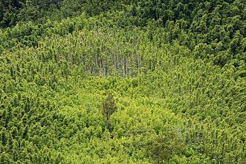 Bamboe op Hawaii van Antwan Janssen