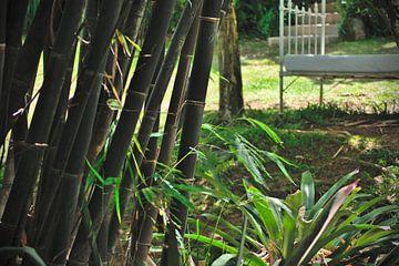 Bamboe van Milan Flik