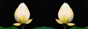 Heilige Lotus Tweeling van Eduard Lamping