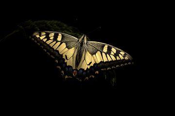 De donkere koninginnenpage van Marvin Van Haasen