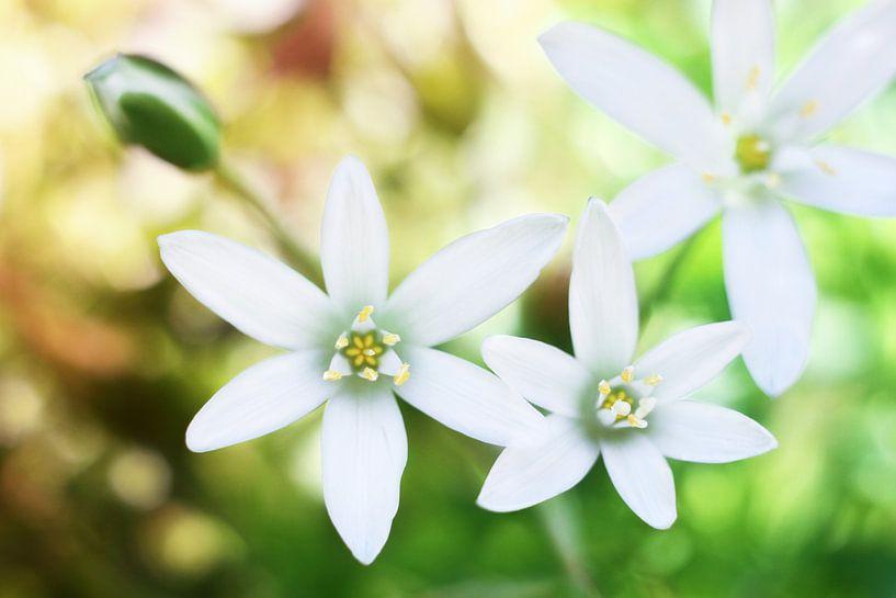 Dream flowers van Michelle Zwakhalen