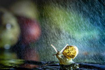 Regen-Spaß von Willian Goedhart