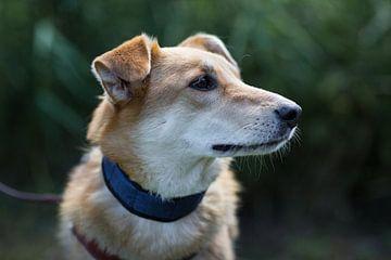 Een hond kijkt in de verte van Martin Boerman