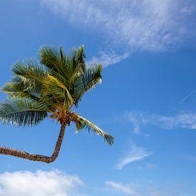 Palmboom. Uitzicht op mooi tropisch strand met palmen. Vakantie en vakantie concept. Tropisch strand van Tjeerd Kruse