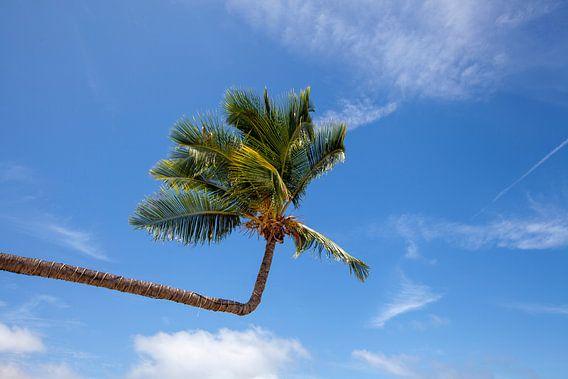 Palmboom. Uitzicht op mooi tropisch strand met palmen. Vakantie en vakantie concept. Tropisch strand