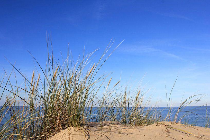 Zauberhafte Dünen von Ostsee Bilder