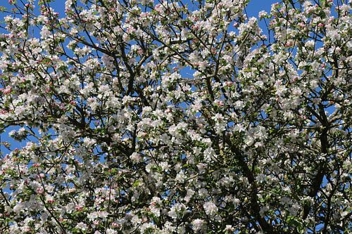 blossomtree van Yvonne Blokland