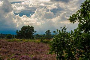 Groevenbeekse Heide Ermelo