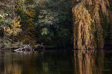 Het meer en de bomen