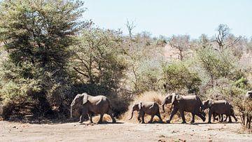 Olifantenfamilie, Zuid-Afrika, Kruger National park|| Safari, Art print