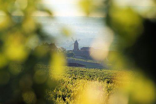 Moulin und Vent - Beaujolais von BTF Fotografie