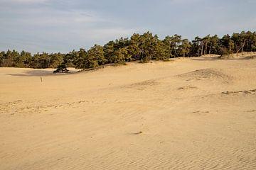Zand, zand en nog eens zand, het is het Hulshorster Zand van Studio de Waay