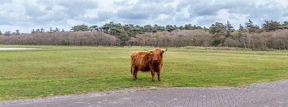 Hooglanders - Texel van Texel360Fotografie Richard Heerschap