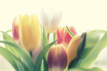 Tulpen Pastel von Rune Scholts