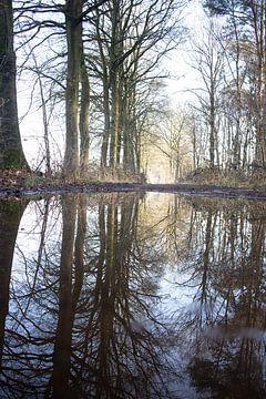 Reflecties in een regenplas van Hans Monasso