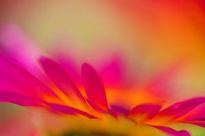 Flower art van Jessica Berendsen