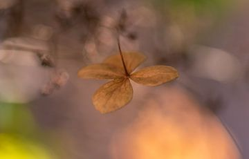 feuille d'hortensia douce sur Tania Perneel
