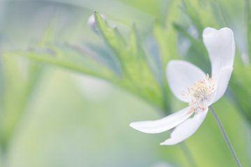 Witte bloem 1 von Esther van Lottum-Heringa