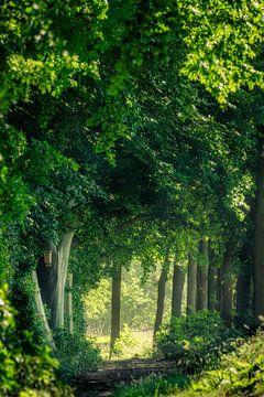 Tunnel van Groen van Koen Boelrijk Photography