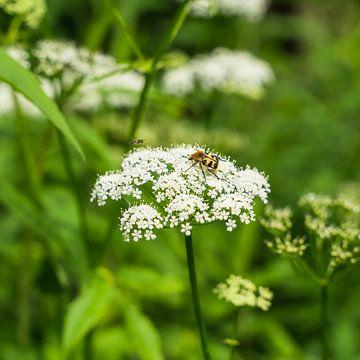 Insekten auf einer Pflanze von zeilstrafotografie.nl
