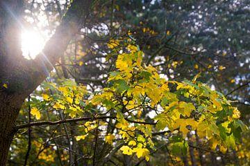 Zonneschijn door de bomen van Frans van Dam